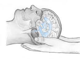 Cranisacralis therapy
