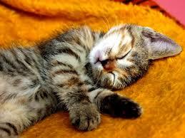 Relaxáció - cica